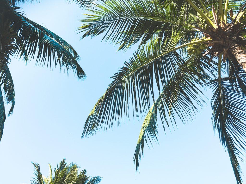 gili-trawangan-palmbomen