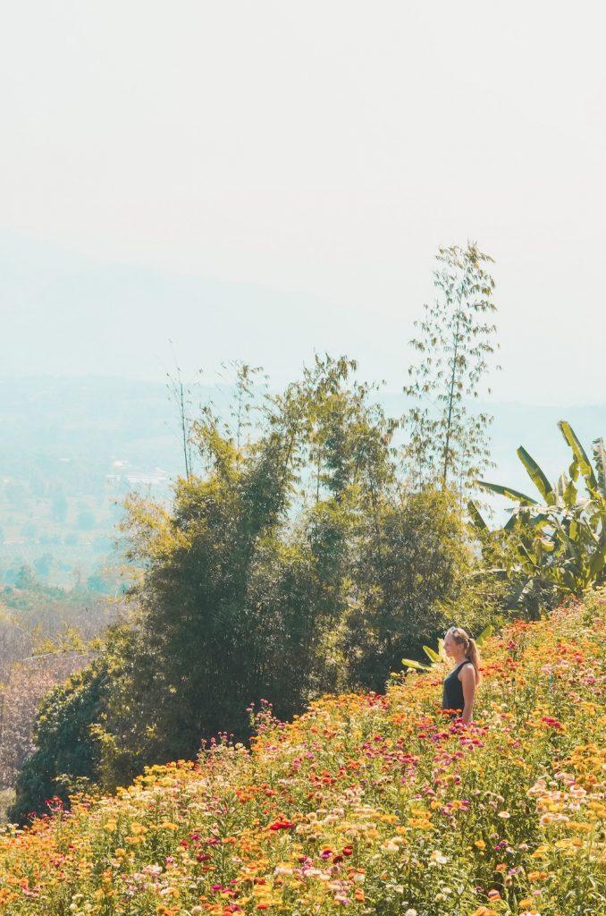 yun-lai-viewpoint