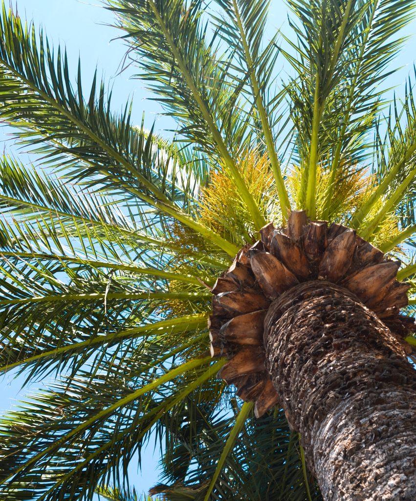Nice-frankrijk-palmboom