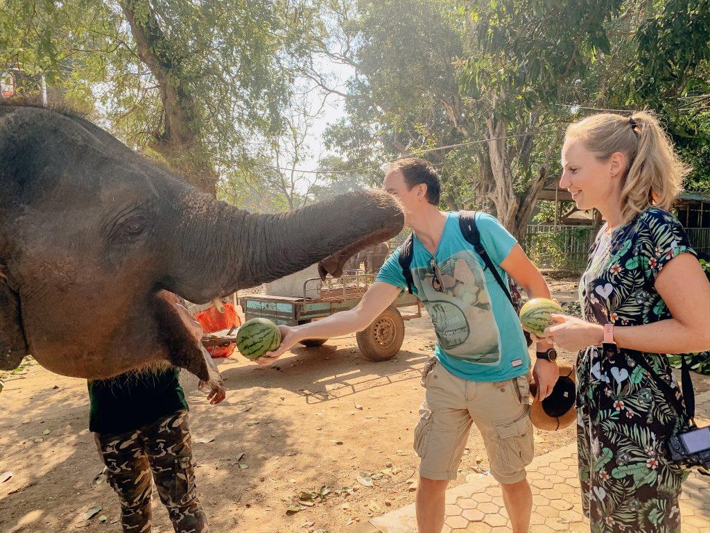 elephant-transit-home