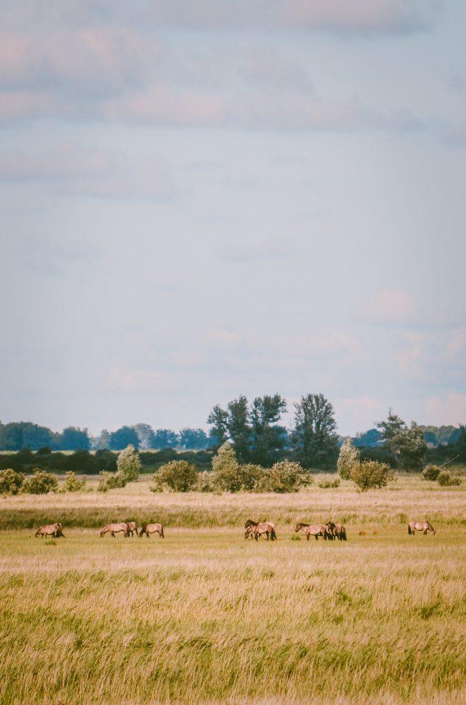 Nationaal-Park-Lauwersmeer