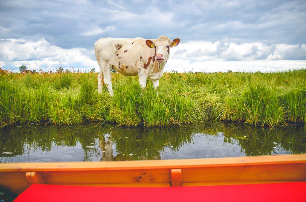Fluisterboot-huren
