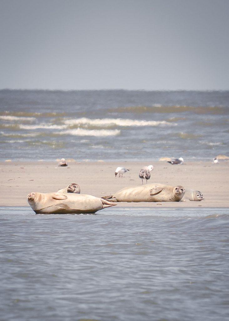 zeehondenexperience-beleef-lauwersoog