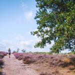 Lemelerberg-wandelen