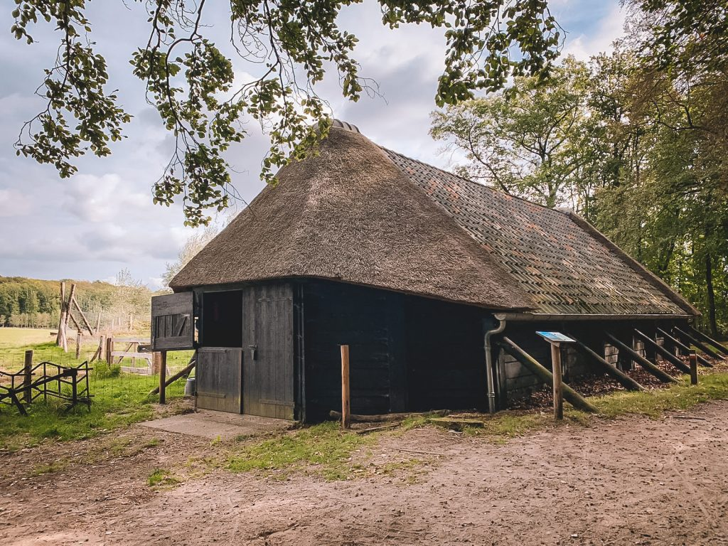 Schaapskudde-Hoog-Buurlo