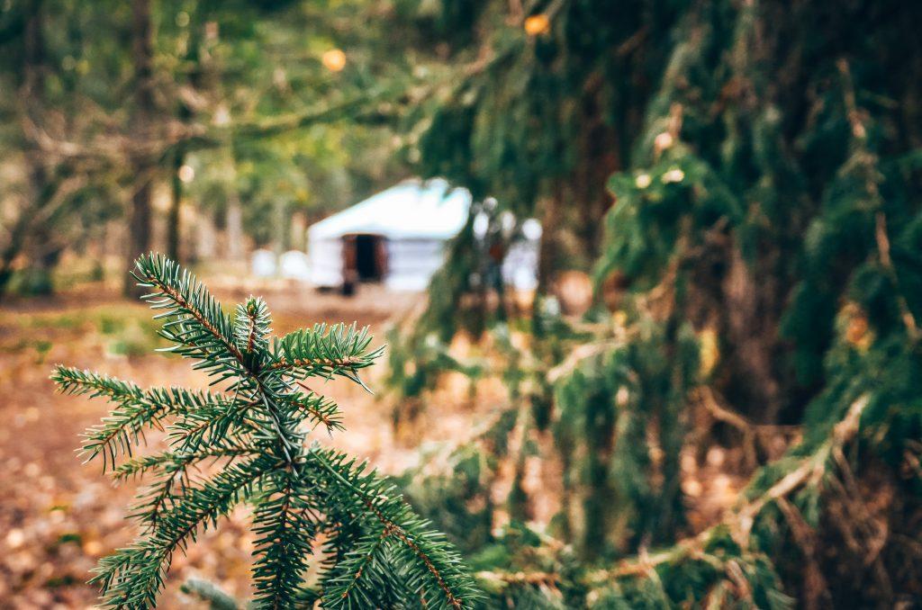 Slapen-in-het-bos-Veluwe