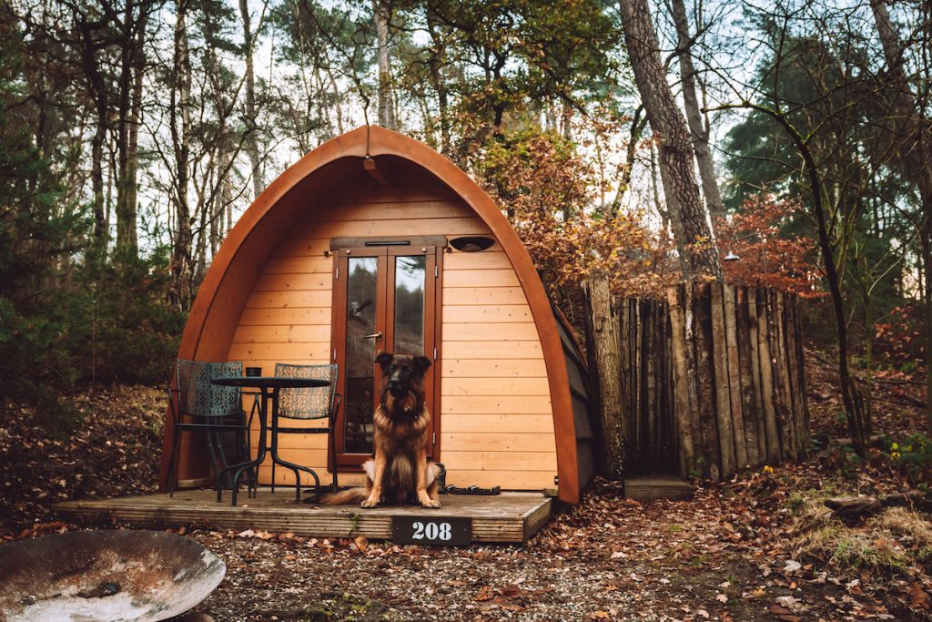 Bush-pod-Buitenplaats-Beekhuizen-hond-welkom