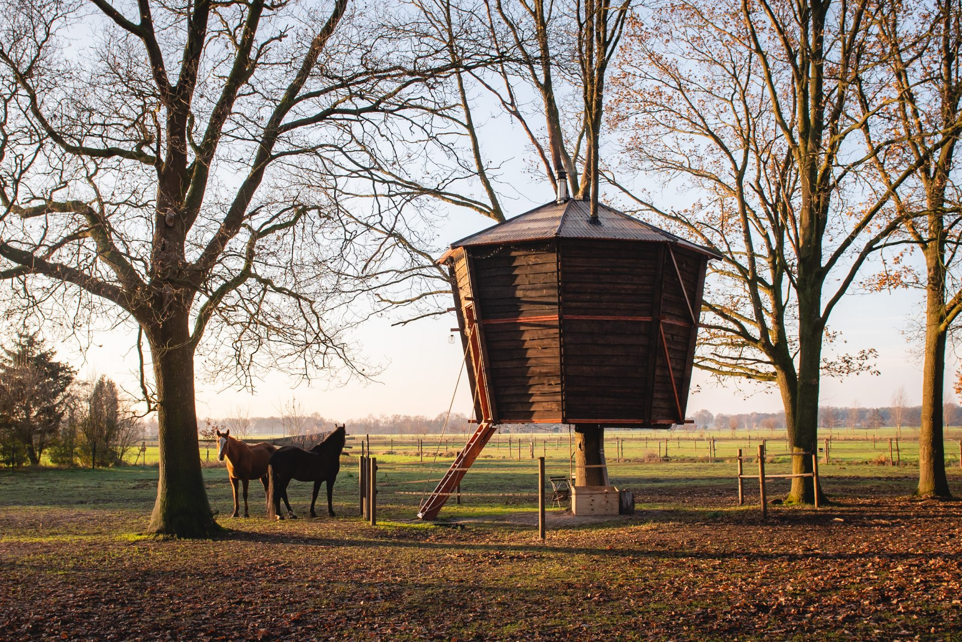 Treehouse-Goldsworthy-Achterhoek-boomhut