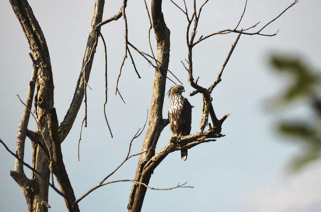 Sigiriya-bezienswaardigheden-Sri-Lanka-Hurulu-Eco-Park
