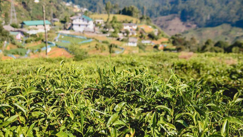 Nuwara-Eliya-Sri-Lanka-route