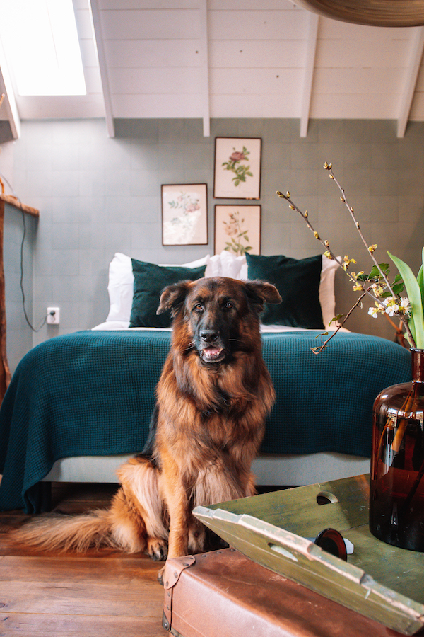 Hond-welkom-bed-and-breakfast-Nederland