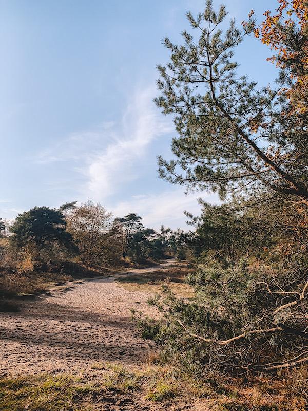 Natte-neuzenroute-hond-losloopgebied-Friesland