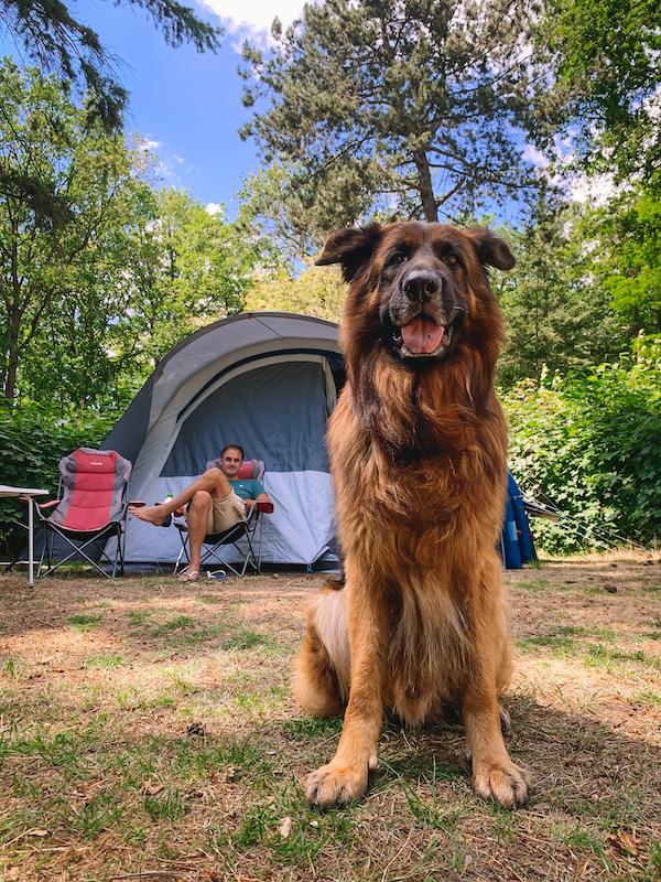 Camping-de-Waps-Oudemirdum-Friesland 1