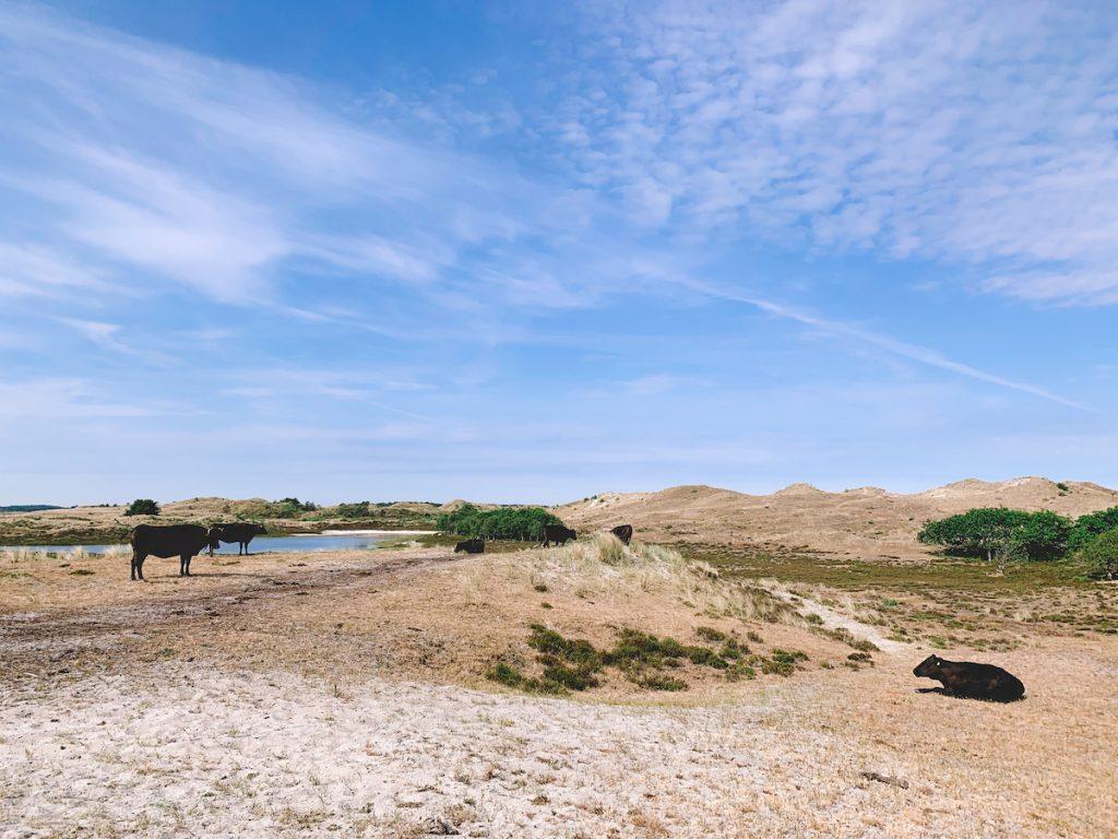 Leukste-uitjes-Noord-Holland-Schoorlse-Duinen