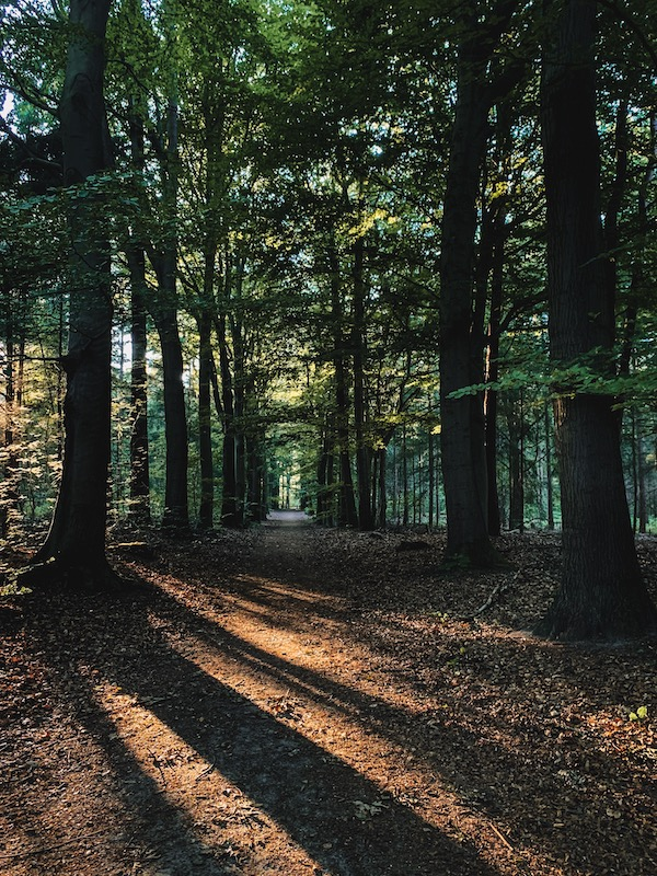 Losloopgebied-hond-bos-Elfbergen-Friesland