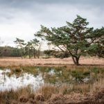 Wandelen-Uffelter-Binnenveld-Drenthe