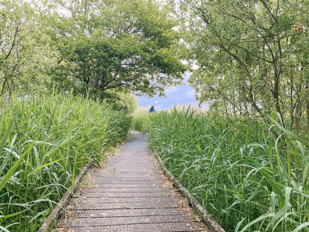 Zwanenmeer-Callantsoog-wandelen-Noord-Holland-uitjes