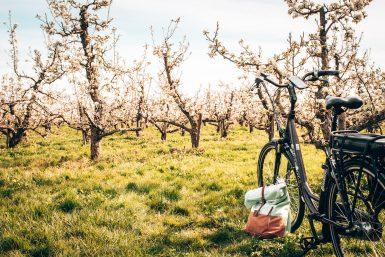 Fietsen-knooppunten-fietsknooppunten-fietsnetwerk.nl-Betuwe