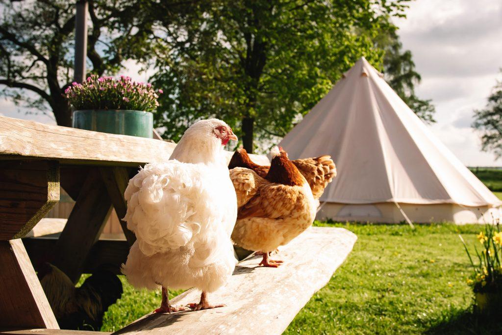 Huren-Bell-tent-slapen-Friesland-Friese-Meren