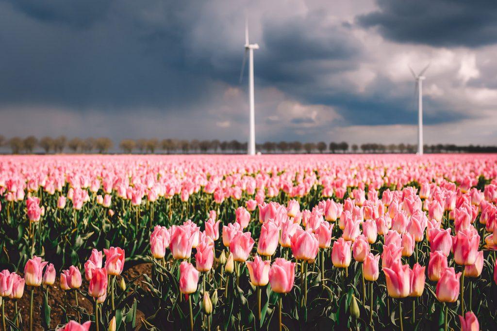 Tulpenroute-Flevoland-Zeewolde