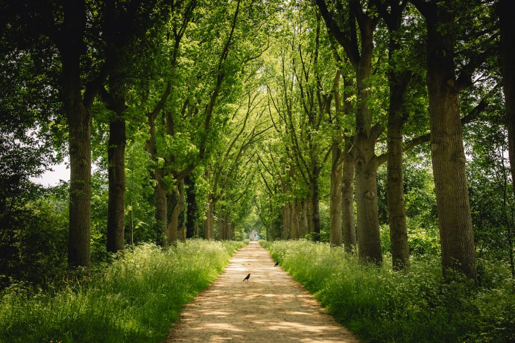 Amelisweerd-wandelen-zwemmen-suppen-Utrecht-Bunnik-Roadtrip-Nederland-e-camper