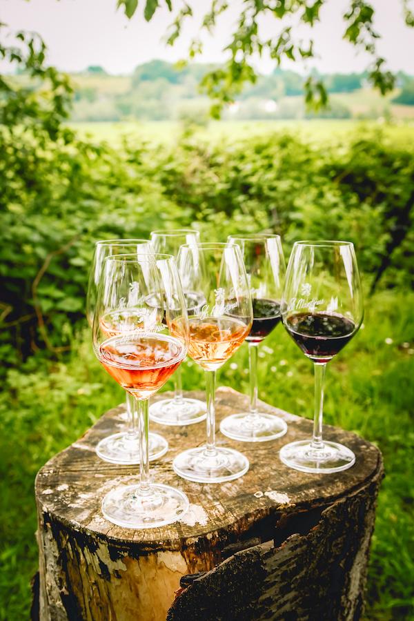 Wijnproeverij-wijngaard-st-Martinus-Limburg 1